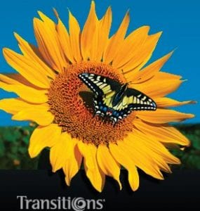 Transitions Vantage lenses butterfly on sunflower crisp sharp image Visual Q Eyecare Melbourne South Yarra Richmond